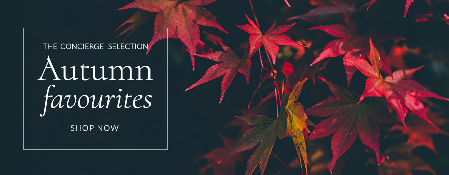 Our favourite Autumn wines